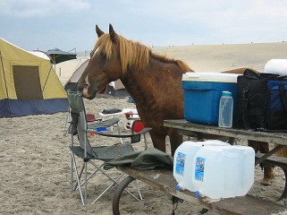 pony-campground